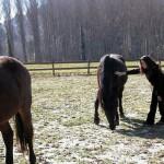 Io con i cavalli